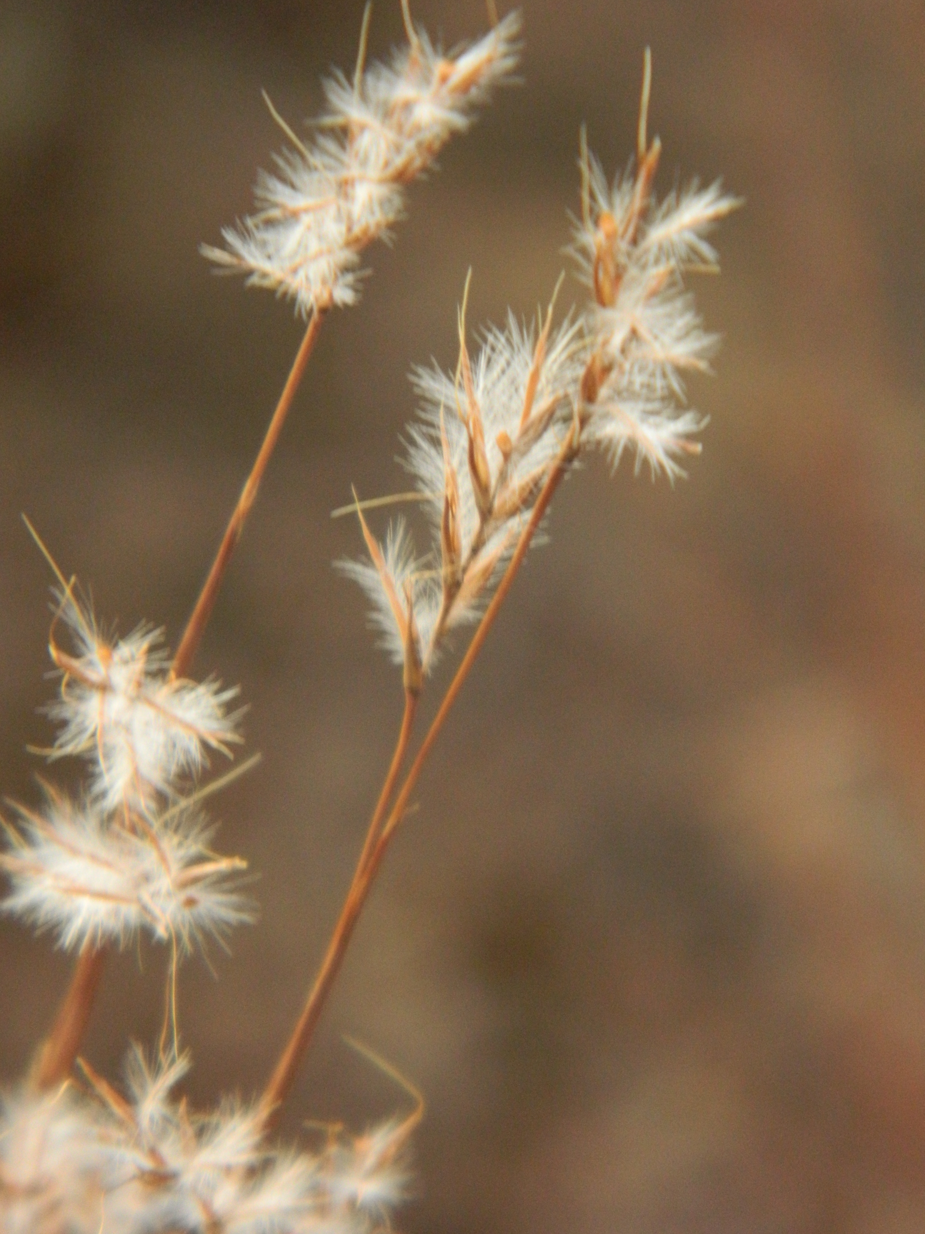 native plants | Prairie Piece: living in harmony with nature